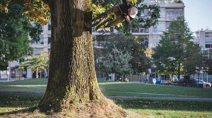 Top 10 Tree Ride Photos